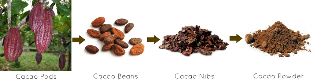 How Cacao Powder Is Created
