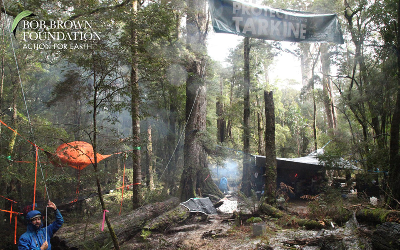 Tentsile Tree Tents' Activism in the Tasmanian Rainforest