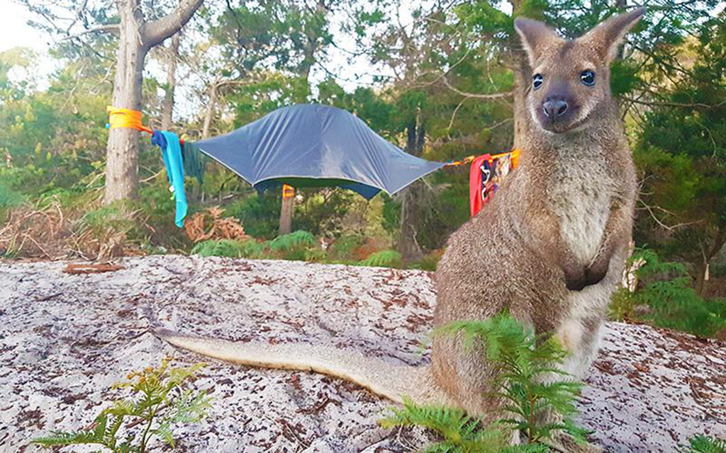#TentsileAdventure: This Couple Went Wild In Tasmania with Tentsile Tree Tents