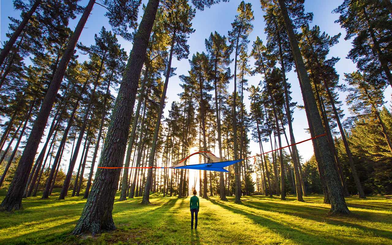 #BecomeOneOfTheMillion: Celebrating 165,000 Tentsile Trees Planted... So Far!