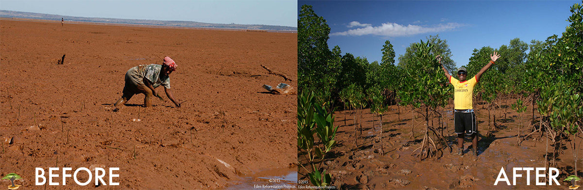 #BecomeOneOfTheMillion: EdenProjects Before/After Tree Planting Madagascar