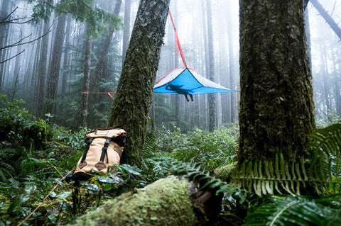 Hammock tent in the trees above a dew covered forest.