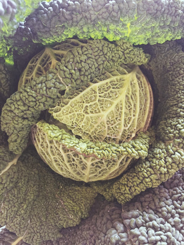Cabbage, Chinese