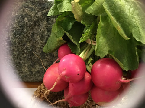 Radishes, Bunch