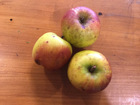 Apples - cooking 'Sturmer'