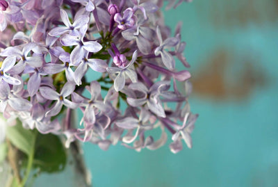 April's Fragrance - Lilac
