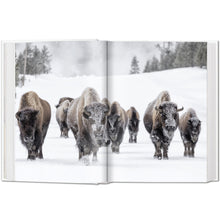 Load image into Gallery viewer, Bisons in Snow
