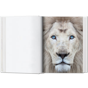 500 Faces of Lions
