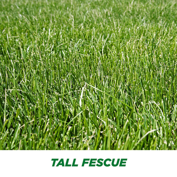 #6905 - Pennington Tall Fescue Bld 3lb