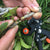 Garden Tools Grafting Pruner Chopper Vaccination Cutting