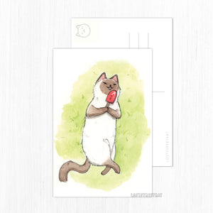 Popsicle Cat Postcard