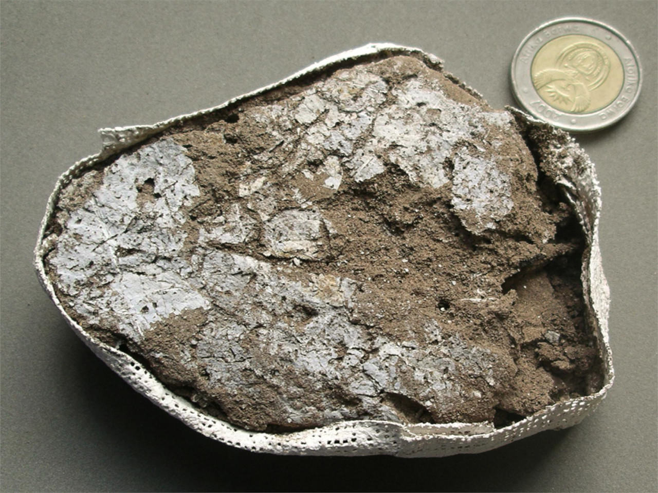 Leaves that made up the prehistoric bedding are seen in a plaster jacket