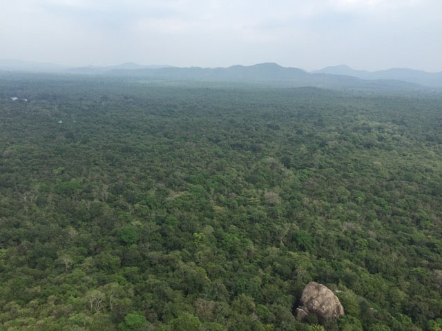 A view from the top of Sigriya
