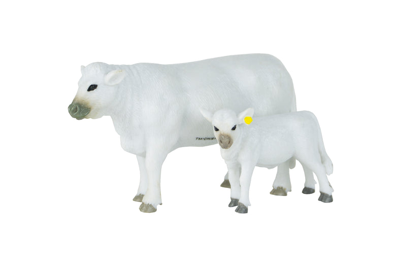 Charolais Cow & Calf