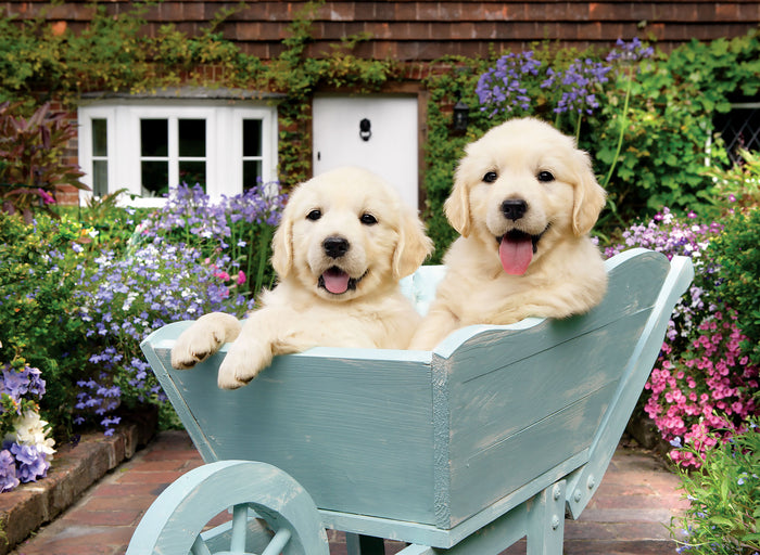 Puppies in a Wheelbarrow