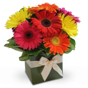 Gerberas delivered Sunshine Coast ~ Funky Love