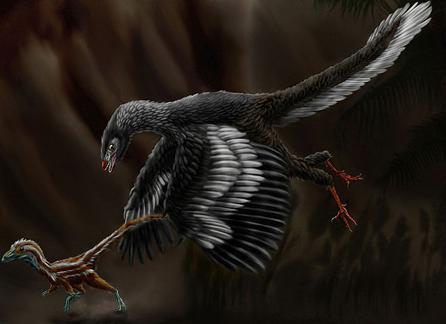 Archaeopteryx a plumes