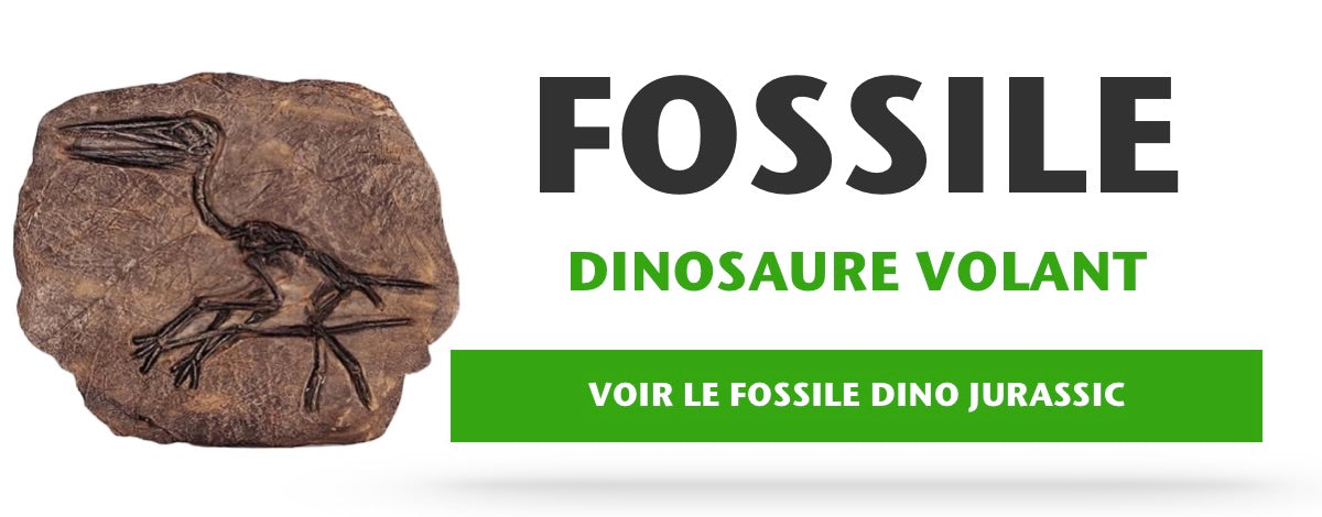 Fossile Dinosaure Volant