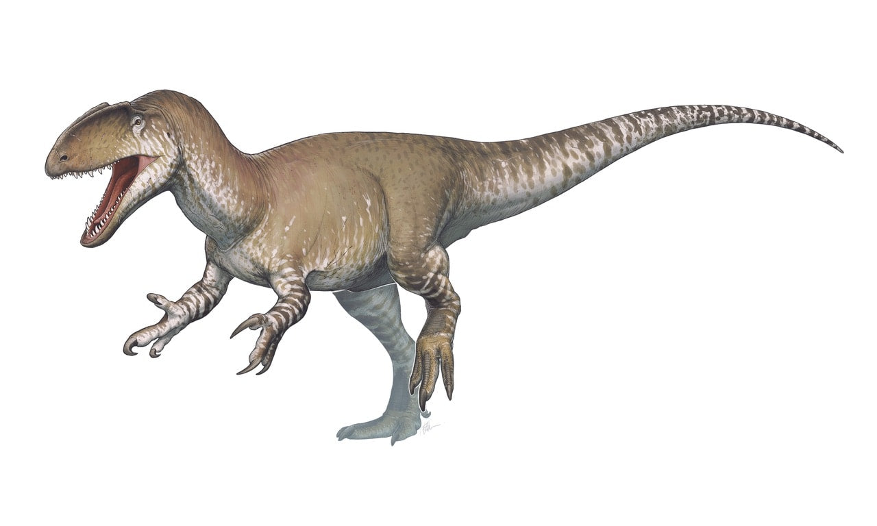 Photo de dinosaure carnivore Neovenator
