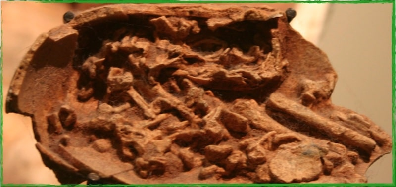 Embryon Dinosaure Fossile