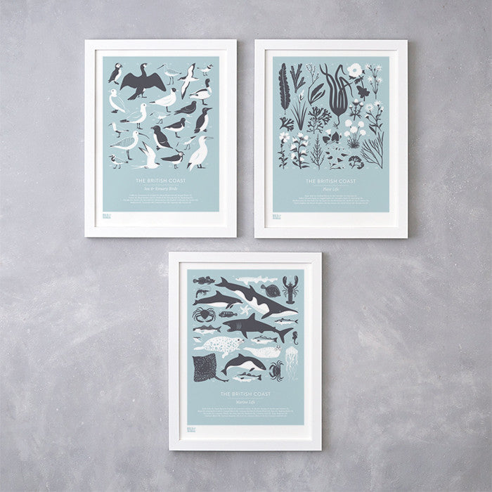 British Coast set of 3 screen prints in duck egg blue, featuring birds, marine and plant life. Delivered worldwide