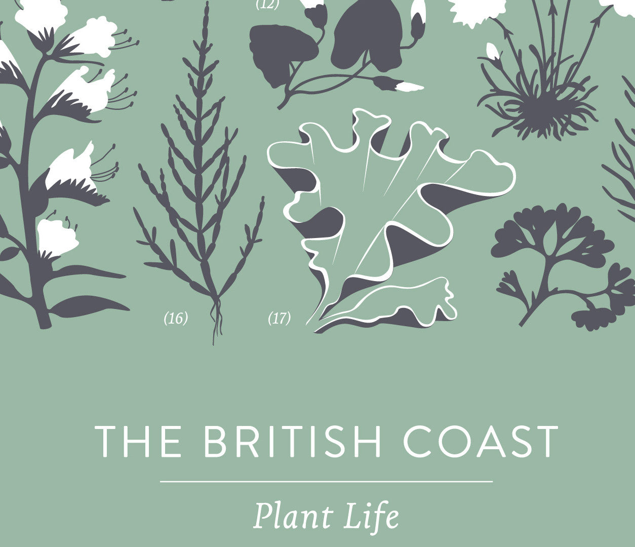 'British Coast: Plants' Print in Seafoam Green