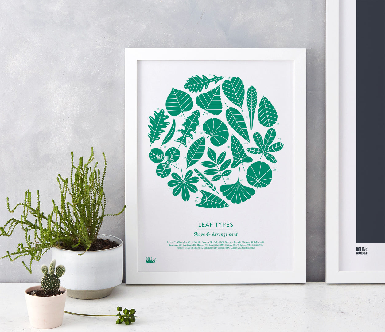 'Leaf Types' Illustrated Art Print in Emerald Green