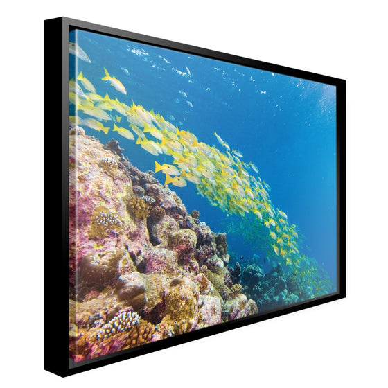 Canvas - PADI Fish Canvas