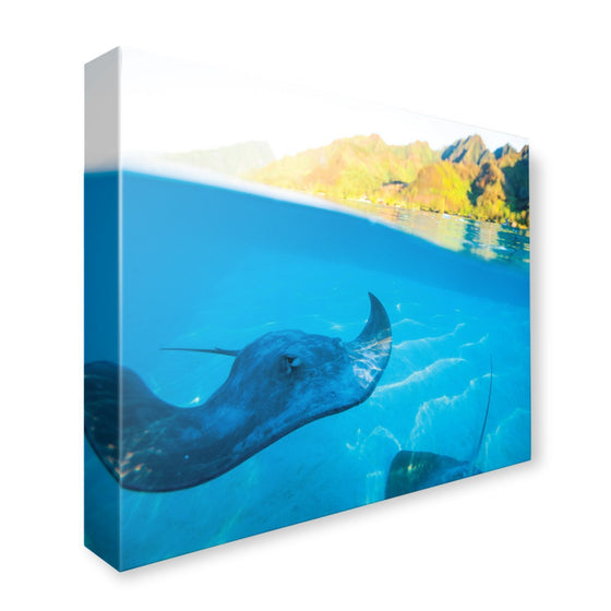Canvas - PADI Manta Ray Canvas