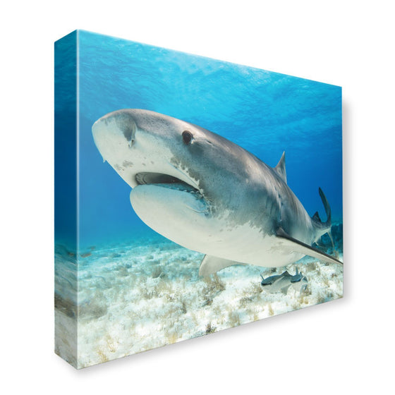 Canvas - PADI Shark Canvas