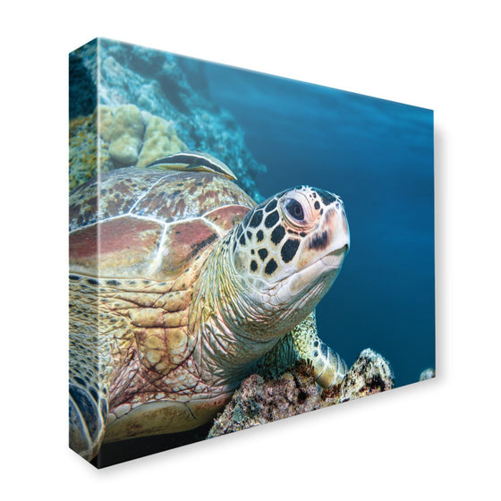 Canvas - PADI Turtle Canvas