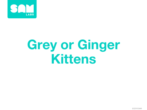 4.8  遺傳與變異 Grey or Ginger Kittens