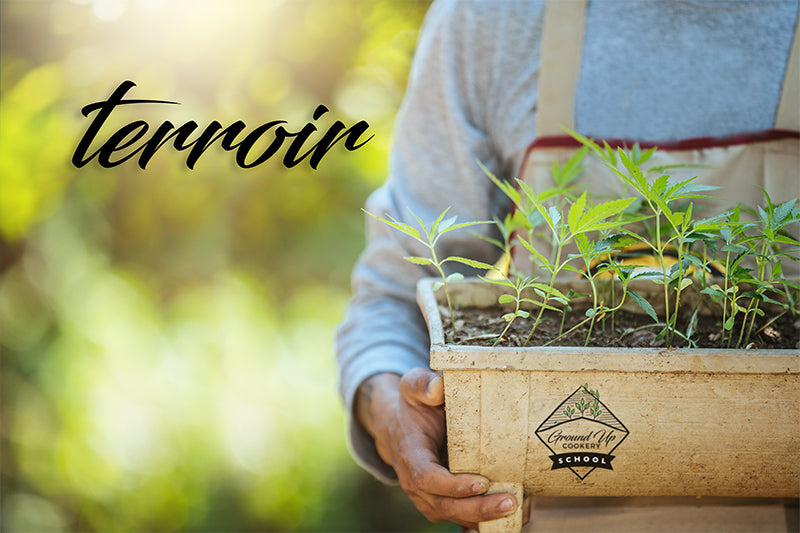 Terroir | Ground Up Cookery School | Devon
