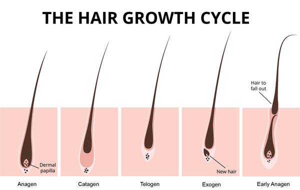 The hair growth cycle | stubble + 'stache