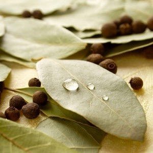 Bay Leaf - The Tea & Spice Shoppe