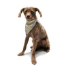 "Alison Coxon ""Yellow"" Pet Bandana - KESS InHouse  - 1"