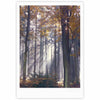 "Alison Coxon ""Autumn Sunbeams"" Trees Photography Fine Art Gallery Print - KESS InHouse"
