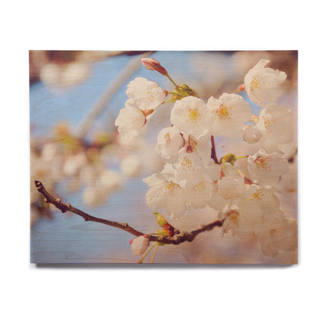 "AFE Images ""Cherry Blossoms"" Multicolor Blue Photography Birchwood Wall Art"