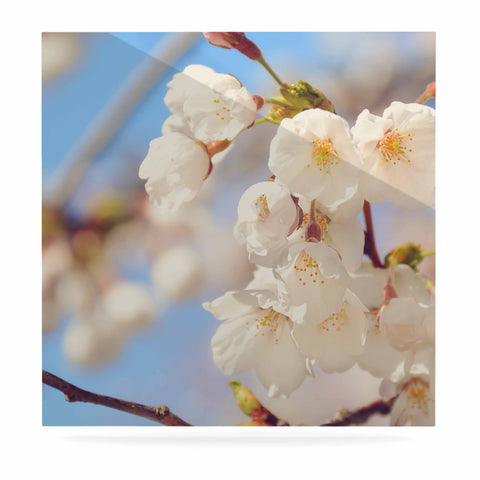 "AFE Images ""Cherry Blossoms"" Multicolor Blue Photography Luxe Square Panel"