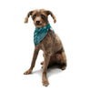 "Anchobee ""Algae"" Pet Bandana - KESS InHouse  - 1"