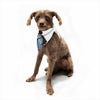 "Anya Volk ""Fish Skateborder"" Blue Red Pet Bandana - Outlet Item"