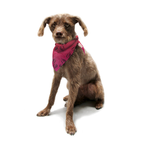 "Catherine Holcombe ""Summer Sunset"" Pet Bandana - KESS InHouse  - 1"
