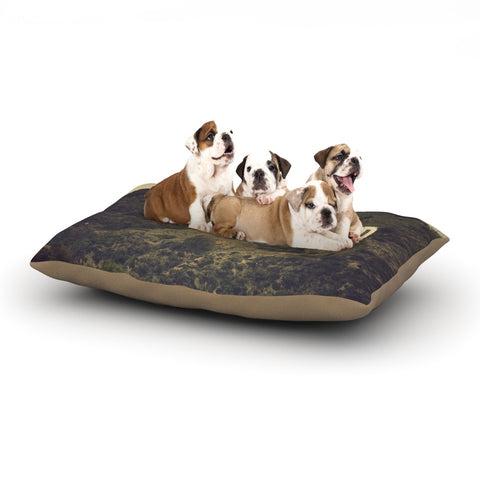 "Catherine McDonald ""Hollywood"" Dog Bed - Outlet Item"