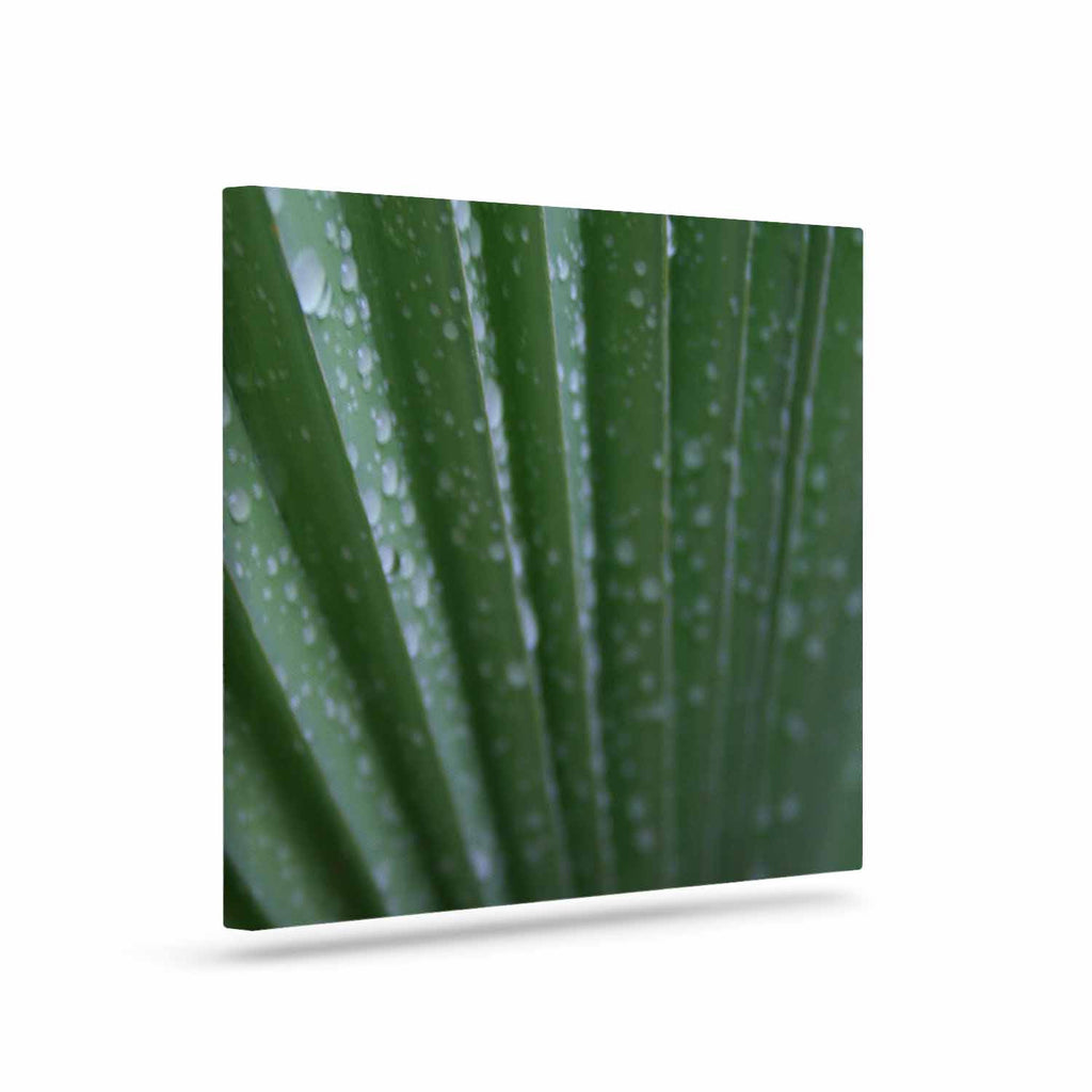 "Cyndi Steen ""Green Palm Frond"" Green Nature Canvas Art - KESS InHouse  - 1"