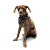 "Danny Ivan ""Bolt Pattern"" Black Lightning Pet Bandana - Outlet Item"