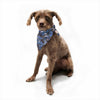 "Danii Pollehn ""Camouflage"" Blue Gray Watercolor Pet Bandana - Outlet Item"