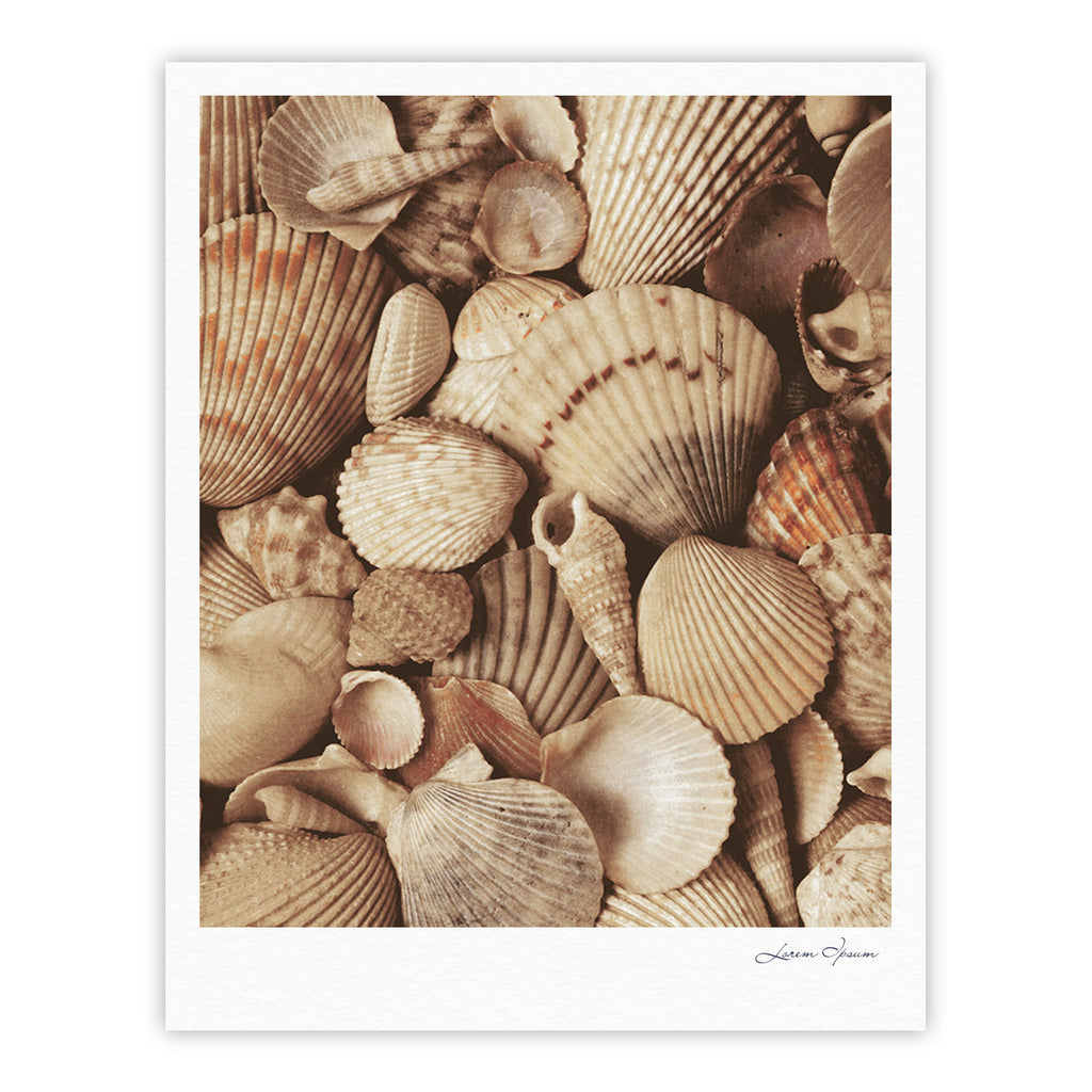 "Heidi Jennings ""Shells"" -Tags Fine Art Gallery Print - KESS InHouse"