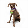 "Ebi Emporium ""California Surf 6"" Teal Purple Pet Bandana - Outlet Item"