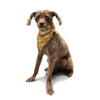 "KESS Original ""Camera Pattern"" KESS Orange Pet Bandana - Outlet Item"
