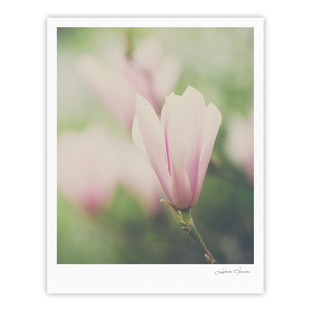 "Laura Evans ""A Pink Magnolia"" Pink Green Fine Art Gallery Print - KESS InHouse"